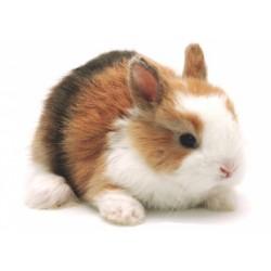 Conejo Toy